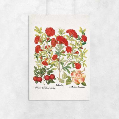 Plakat z owocami jadalnymi i kwitnącym drzewem