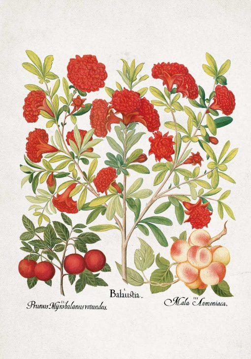 Plakat z owocami jadalnymi na gałązkach