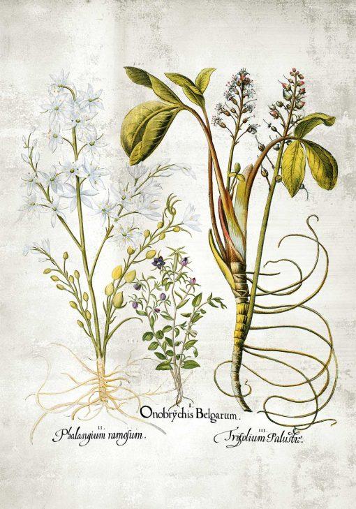 Plakat z plumerią - Kwiat zakochanych do jadalni