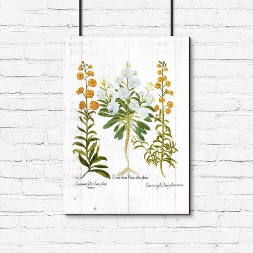 Plakat z pomarańczowymi goździkami do salonu