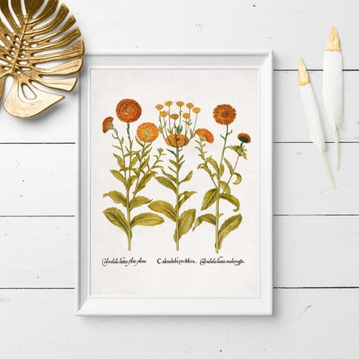 Plakat z pomarańczowymi kwiatkami