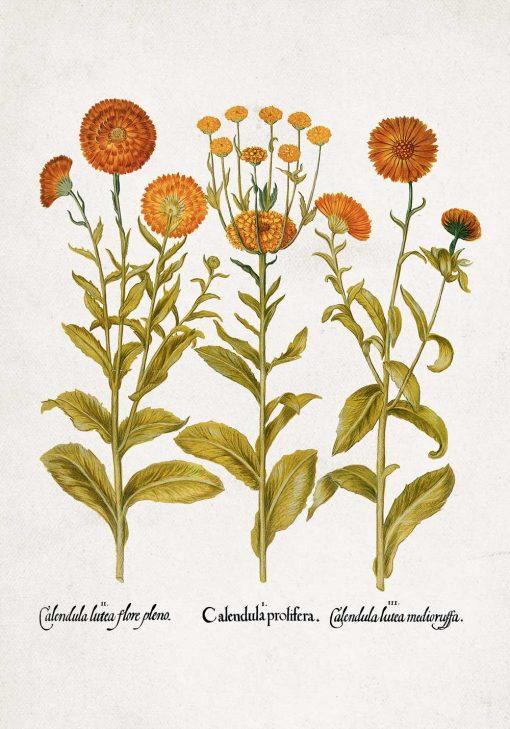 Plakat z pomarańczowymi kwiatuszkami