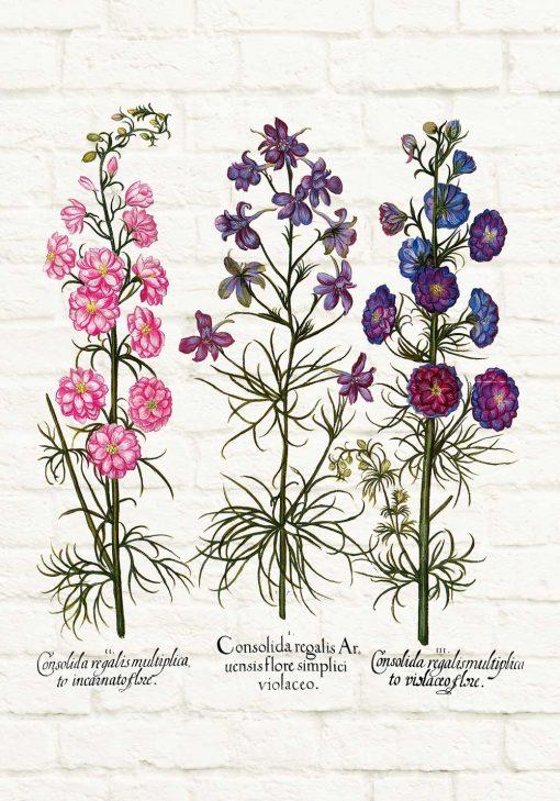 Plakat z roślinami dzikorosnącymi i ich korzeniami