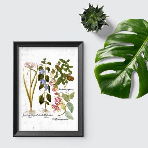 Plakat z roślinami kwitnącymi na tle desek