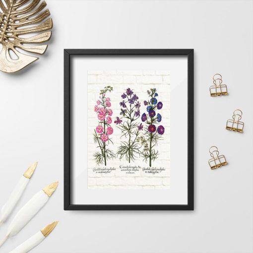 Plakat z roślinami łąkowymi, ich nazwami łacińskimi