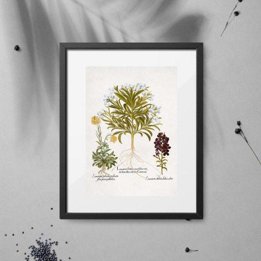 Plakat z roślinami leczniczymi i ich korzeniami