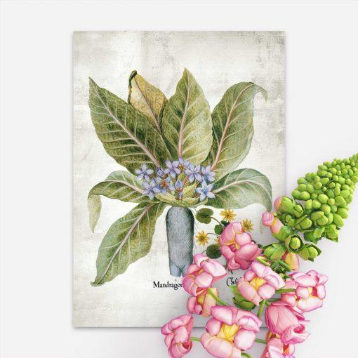 Plakat z roślinami magicznymi