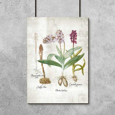 Plakat z roślinami z rodziny storczykowatych