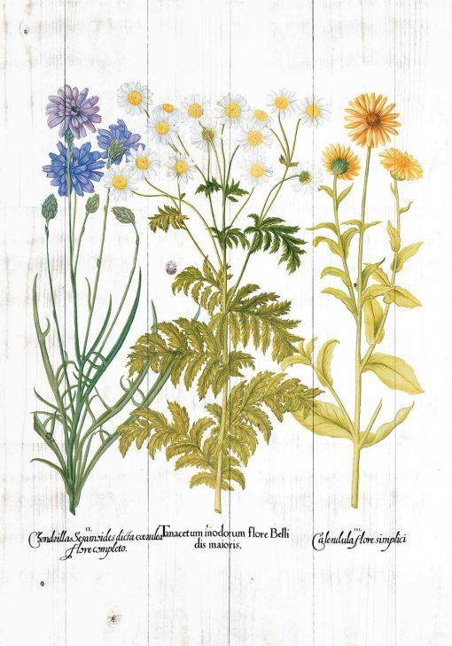Plakat z roślinami zielnymi