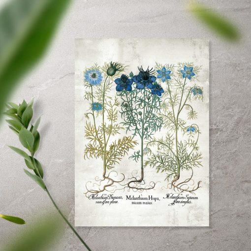 Plakat z roślinami zielnymi w niebieskich barwach