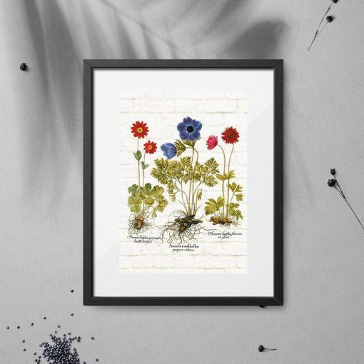 Plakat z zawilcami lub anemonami