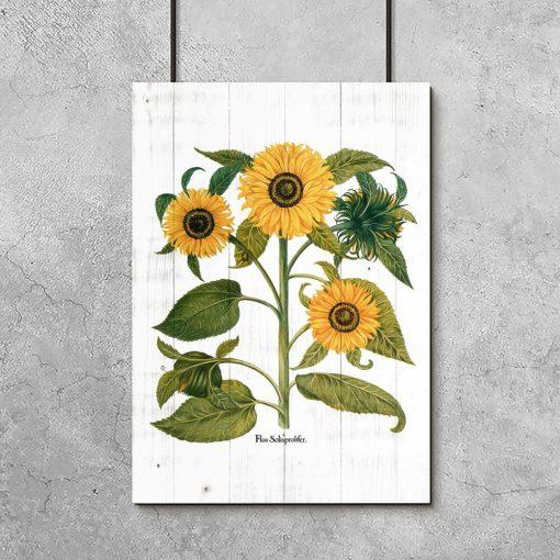 Plakat ze słonecznikami