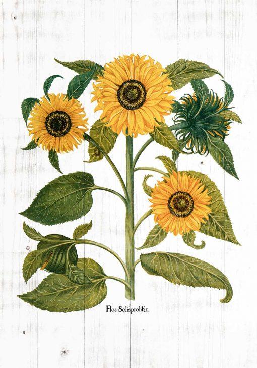 Plakat ze złotymi słonecznikami