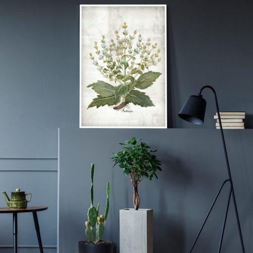 Plakat zielarski z szałwią do salonu