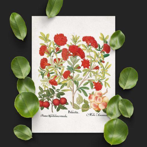 Plakaty edukacyjne z owocami i kwiatami