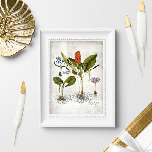 Plakaty kwiaty i kłącza