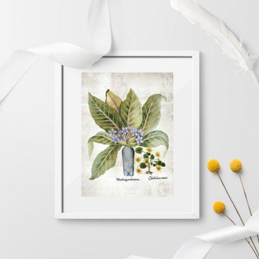 Plakaty rośliny legendy