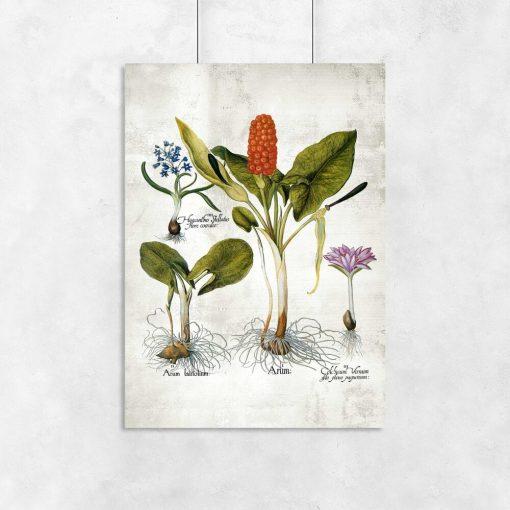 Plakaty z bylinami