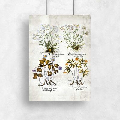 Plakaty z roślinami leczniczymi