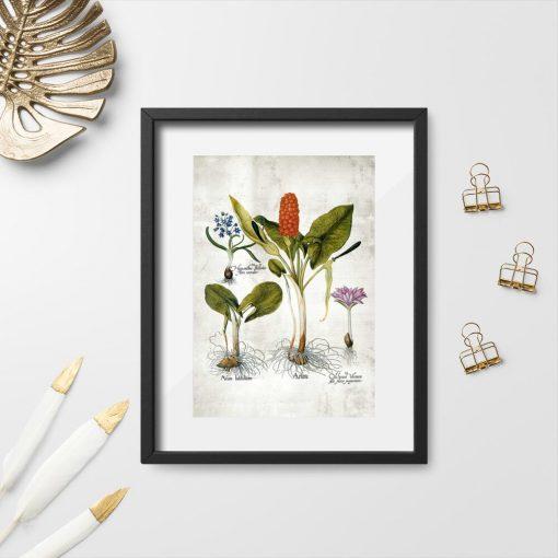 Plakaty z roślinami wieloletnimi