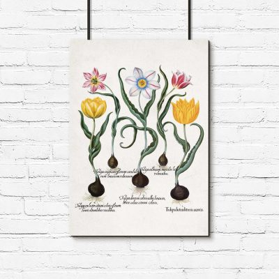 Plakaty z tulipanami i cebulkami
