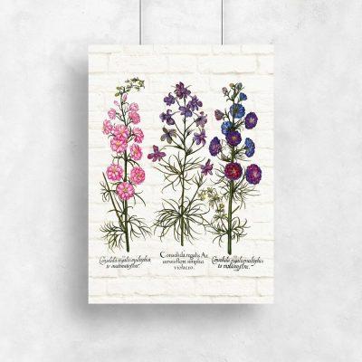Plakaty z ziołami w kolorach różu