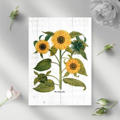 Słoneczniki na plakacie