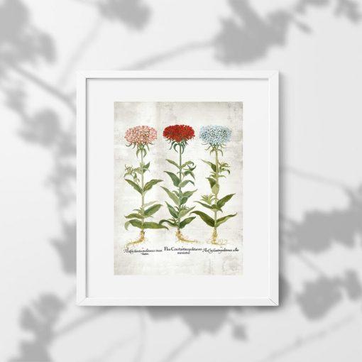 Kwiaty ogrodowe na plakacie