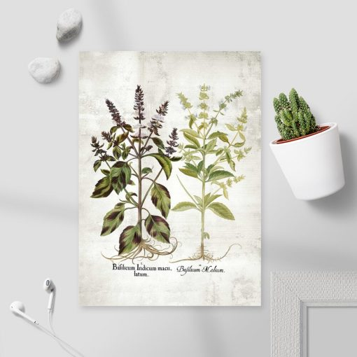 Plakat bazylia i jej kwiaty