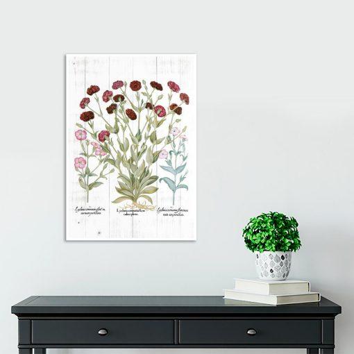 Plakat botaniczny - Firletka kwiecista do gabinetu
