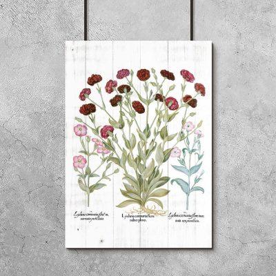 Plakat botaniczny - Firletka kwiecista do przedpokoju