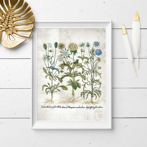 Plakat edukacyjny z roślinami i nazwami łacińskimi