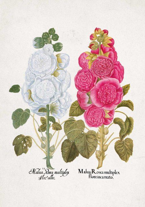 Plakat malwa różowa i biała