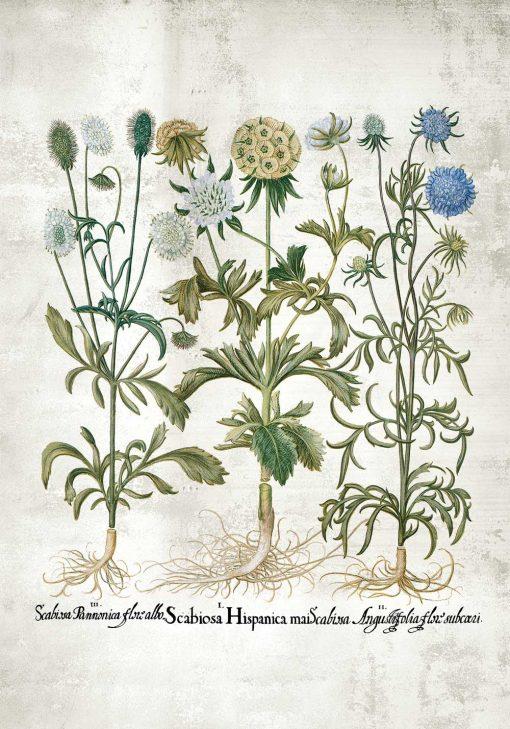 Plakat rośliny dekoracyjne