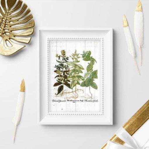 Plakat rośliny zielne