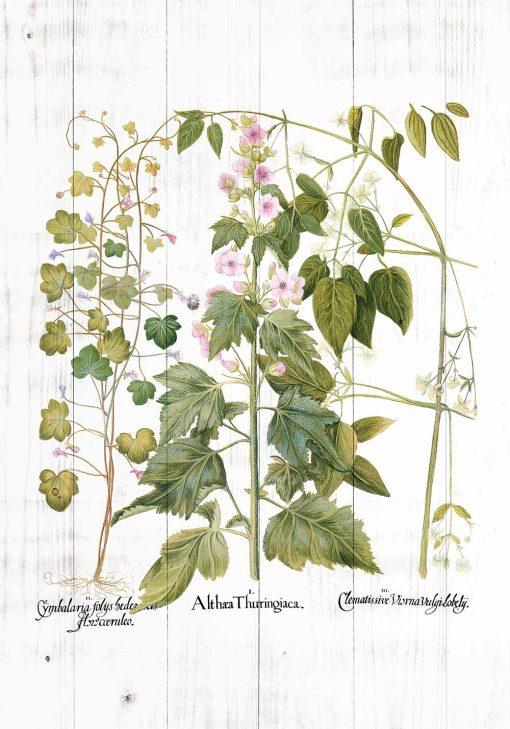 Plakat rośliny zielne i ozdobne
