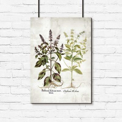Plakat z kwiatami bazylii