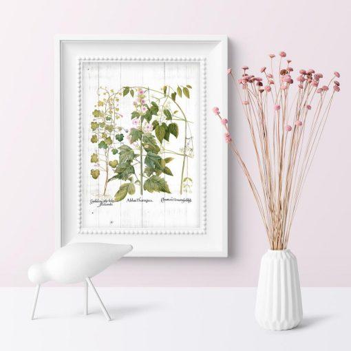 Plakat z kwiatami i ziołami