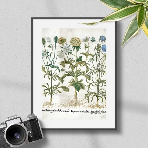 Plakat z motywem roślin kwitnących