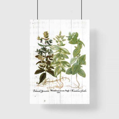 Plakat z motywem ziela
