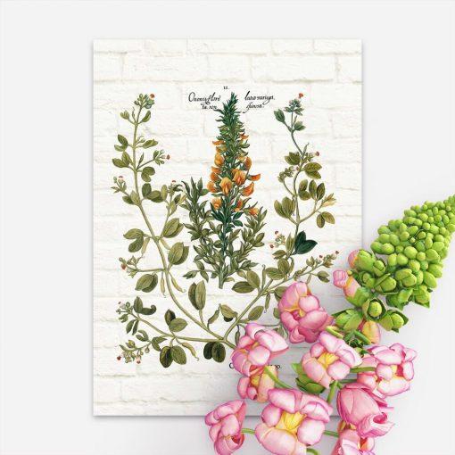 Plakat z rośliną śródziemnomorską