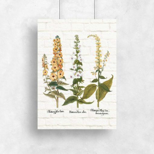 Plakat z rośliną wielokwiatową