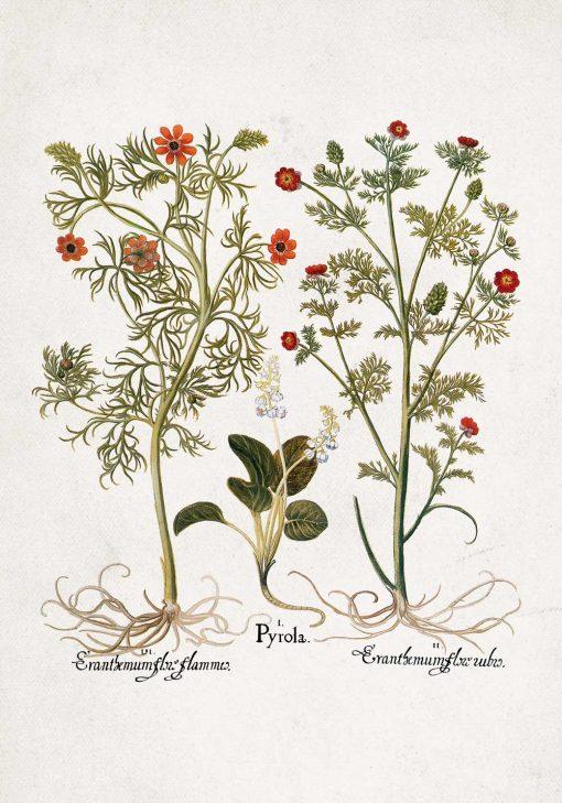 Plakat z roślinami łąkowymi