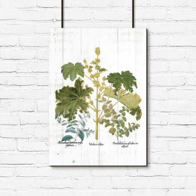 Plakat z roślinami liściastymi