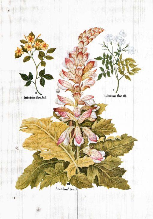 Plakat z roślinami ozdobnymi