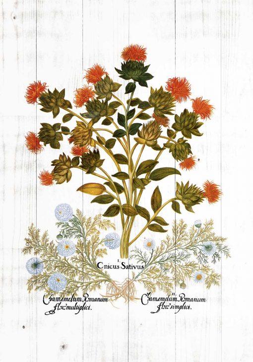 Plakat z roślinami zielnymi na tle desek