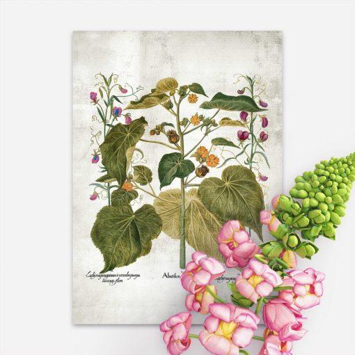 Plakat z zaślazem i innymi roślinami
