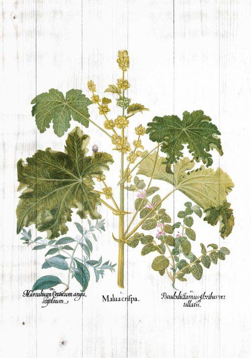 Plakat z zielonymi roślinami