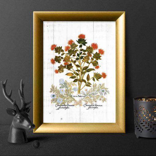 Plakat z ziołami: drapacz i rumianek