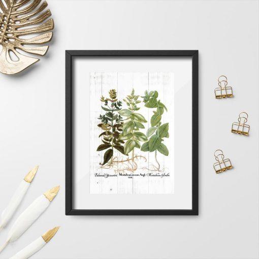 Plakat z ziołami i łacińskimi nazwami